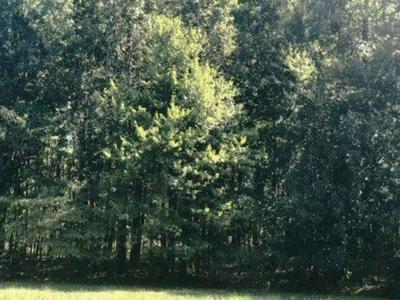 MICHIE PEBBLE HILL ROAD, Stantonville, TN 38379 - Photo 1