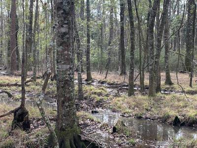00 NEW FOREST HWY, Douglas, GA 31535 - Photo 2