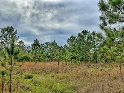 NE CAMPBELL RD, Bronson, FL 32621 - Photo 2