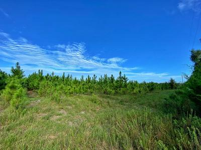 0000 NW 22 CT, Bell, FL 32619 - Photo 2