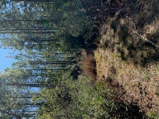 TBD SR 27, Perry, FL 32347 - Photo 1