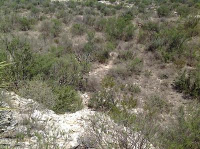 CEDAR CREEK TRACTS 159, LANGTRY, TX 78871 - Photo 2