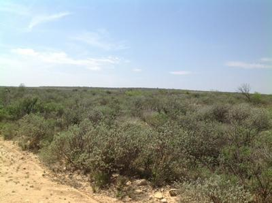 HERITAGE CANYON RANCH (PHASE I), Dryden, TX 78851 - Photo 2