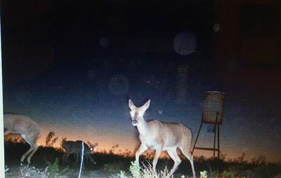 RANCH RD 1865, Pumpville, TX 78871 - Photo 2