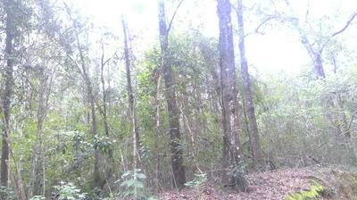 40 ACRES S JACK RD, Laurel Hill, FL 32567 - Photo 1