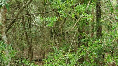 XXX HWY. 90, Defuniak Springs, FL 32433 - Photo 2