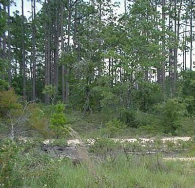 5ACRES SOUTH DR, Defuniak Springs, FL 32433 - Photo 1