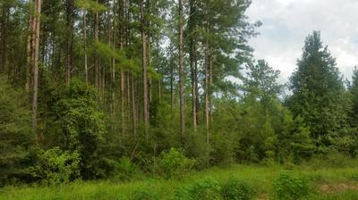 LOT 14 REEDY CREEK CROSING, Westville, FL 32464 - Photo 1