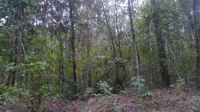 25 ACRES S JACK RD, Laurel Hill, FL 32567 - Photo 2