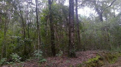 40 ACRES S JACK RD, Laurel Hill, FL 32567 - Photo 2