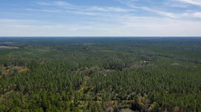 40 ACRES BUCK TYNER ROAD, Laurel Hill, FL 32567 - Photo 1