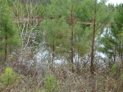 10 ACRES MOSLEY RD, Defuniak Springs, FL 32433 - Photo 1