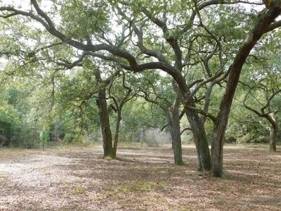 1.5 AC WILKERSON BLUFF ROAD, Holt, FL 32564 - Photo 2