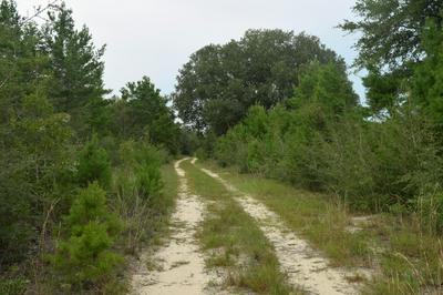 12.23 ACRES ON HANNAH BRANCH ROAD, Crestview, FL 32539 - Photo 2