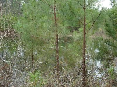 10 ACRES MOSLEY RD, Defuniak Springs, FL 32433 - Photo 2