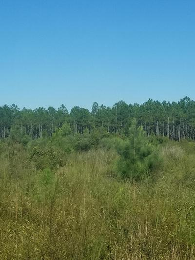 80 ACRES HART RD, Laurel Hill, FL 32567 - Photo 1
