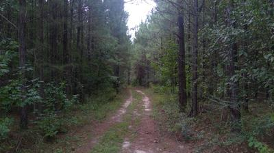 80 ACRES S JACK RD, Laurel Hill, FL 32567 - Photo 1