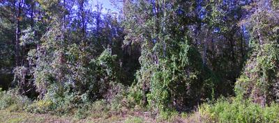 X MORMON TEMPLE ROAD, BAKER, FL 32531 - Photo 2