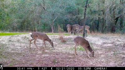 817 HOLLY TREE LN, Crestview, FL 32539 - Photo 1