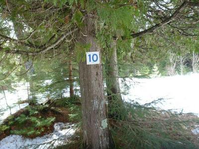 LOT #10 NAUBINWAY SHORES, Naubinway, MI 49762 - Photo 1