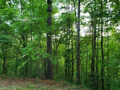LOT 10 GOBLE GAP, Clayton, GA 30525 - Photo 2