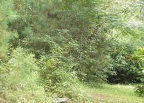96 MCINTOSH ST, Whitesburg, GA 30185 - Photo 2