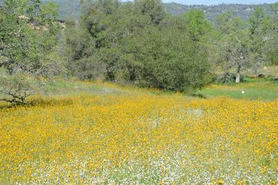 17020 WILDFLOWER LN, Prather, CA 93651 - Photo 2