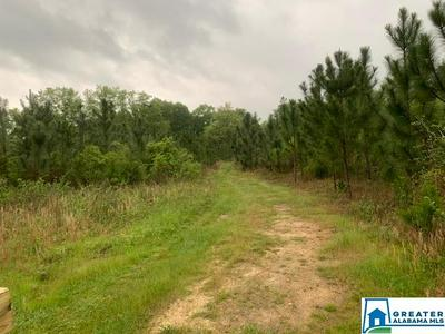 221 CO RD 23 1, Verbena, AL 36091 - Photo 2