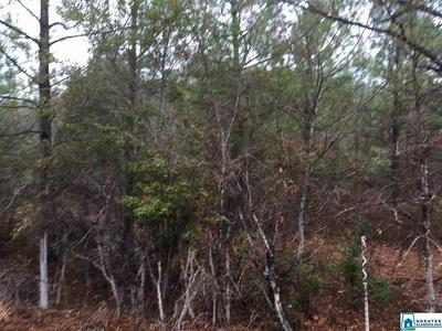 JACKSON TRACE RD 28 ACRES, Ohatchee, AL 36271 - Photo 2