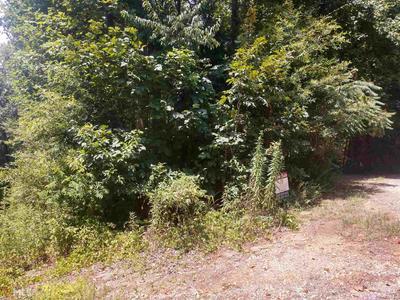 97 DOGWOOD TRL, Martin, GA 30557 - Photo 1