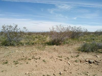 175TH ST EAST & AVE W14, Llano, CA 93544 - Photo 2