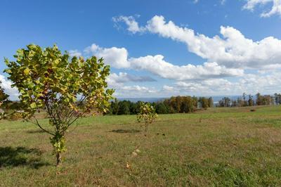 0 JASPER HIGHLANDS BLVD, Jasper, TN 37347 - Photo 2