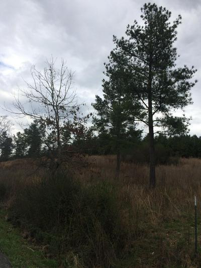 11 BLYTHES FERRY RD, Dayton, TN 37321 - Photo 2