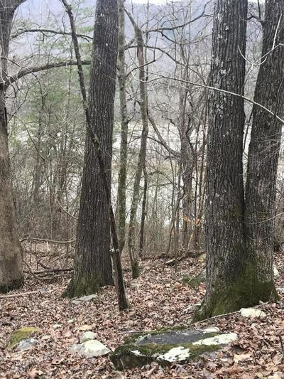 -- MULLINS COVE RD #LOTS 8 & 9, WHITWELL, TN 37397 - Photo 2