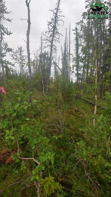 1/8 MI. OFF PARKS HIGHWAY TRACT A, HEALY, AK 99743 - Photo 1