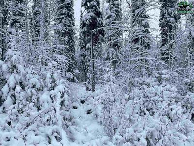 NHN LOT 16 LUCILLE AVENUE, North Pole, AK 99705 - Photo 1