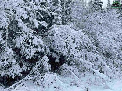 NHN LOT 10 LUCILLE AVENUE, North Pole, AK 99705 - Photo 2
