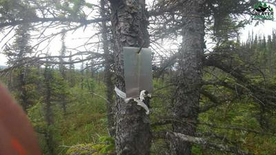 1/8 MI. OFF PARKS HIGHWAY TRACT A, HEALY, AK 99743 - Photo 2