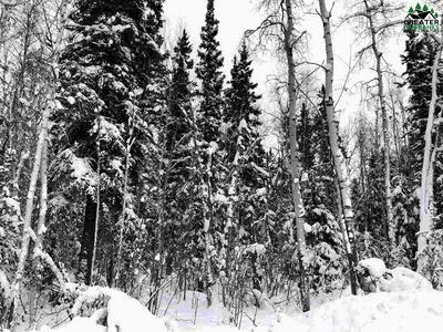 NHN HOPPER CREEK DRIVE, Fairbanks, AK 99712 - Photo 1