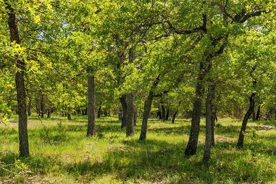 00 -- MYSTIC OAKS TRAIL # 6, Fredericksburg, TX 78624 - Photo 1