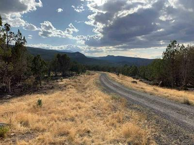10791 52 1/2 ROAD, Molina, CO 81646 - Photo 2