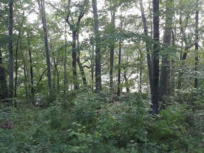 299 HACKBERRY LN, Mammoth Cave, KY 42259 - Photo 2