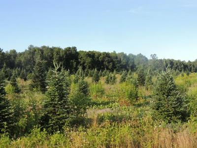 ON CTH C, Deerbrook, WI 54424 - Photo 1