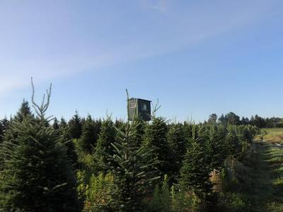 ON HWY 45, Deerbrook, WI 54424 - Photo 1