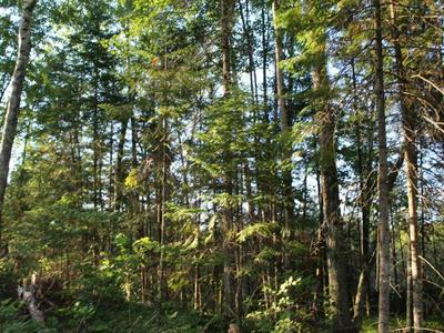 3 AC. CLEAR LAKE RD, Elcho, WI 54428 - Photo 2