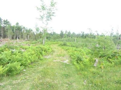 OFF STAR LAKE RD # 6.9 ACRES, Eagle River, WI 54521 - Photo 2