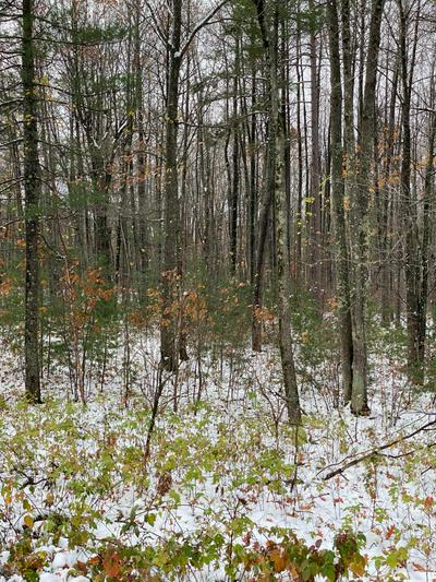 LOT A EAST BAY LN, Tomahawk, WI 54487 - Photo 2