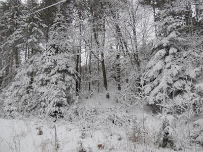ON HWY 45 # 3 ACRES, Summit Lake, WI 54485 - Photo 1