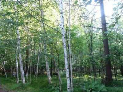 LOT 17 LUNDY LN, Woodruff, WI 54568 - Photo 1