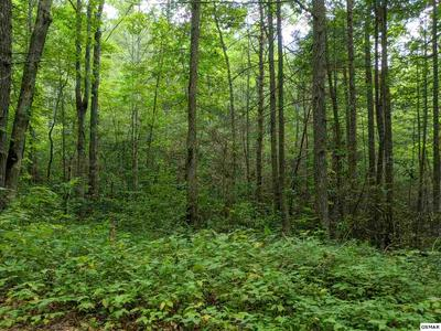 BOXELDER ST LOT 17, Sevierville, TN 37876 - Photo 1